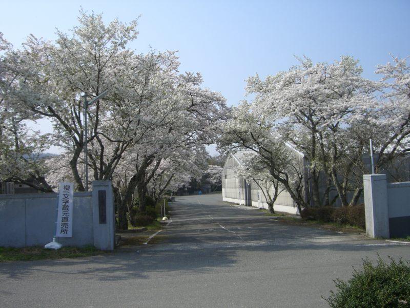 櫻酒造入口